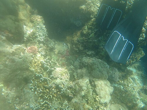 0721 花蓮浮潛