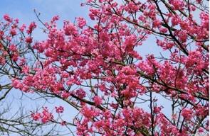 春暖花開露營溫泉賞花趣