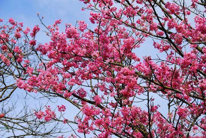 秘徑露營天然溫泉再加花季賞櫻