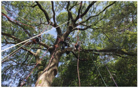 攀樹活動體驗
