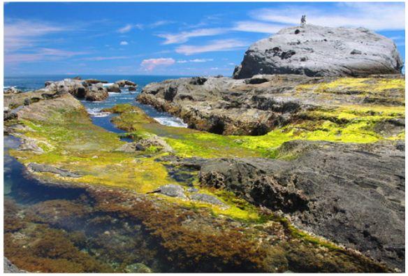 石梯坪潮間帶生態觀